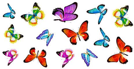 butterfly346