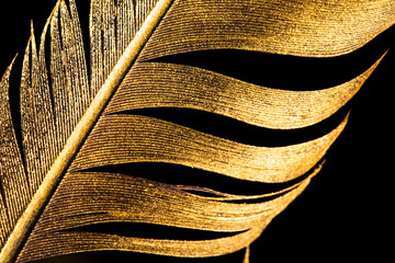 The feather is covered with gold paint close-up. Pen for calligraphy. Golden feather. Wall mural