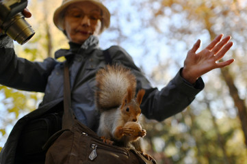 A woman takes a picture of a squirrel eating a nut in Omsk