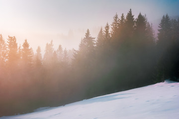 foggy sunrise in winter. spruce forest on a snow covered slope in glowing mist. beautiful nature scenery in the morning