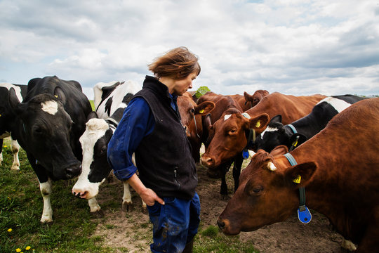Farmer with cows in field