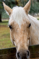 Beautiful Horse on Fence Post