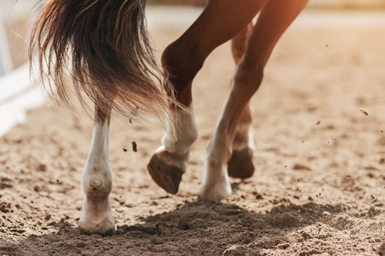 The hooves of a sorrel horse with a fluttering bushy tail, trotting across a sandy field, raising dust in the sunlight.