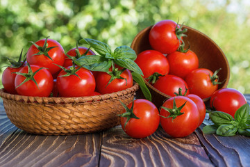 Fototapeta cherry tomatoes and basil on wooden board outdoors obraz