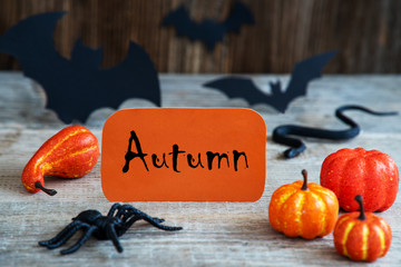 Orange Label With English Text Autumn. Scary Halloween Decoration Like Bat, Snake And Spider