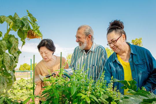 Seniors Working in a Community Garden