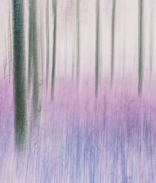 Blurred motion abstract of lodgepole pine forest and meadow.,Blurred motion abstract of lodgepole pine forest and meadow