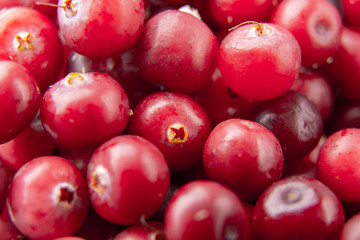 Close-up of natural cranberry berries, from a farmers market / Healfy concept