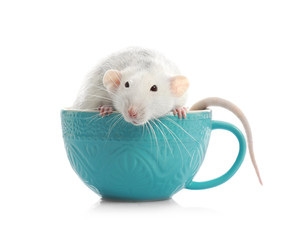 Cute little rat in cup on white background
