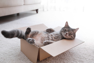 Spoed Fotobehang Kat Cute grey tabby cat in cardboard box on floor at home