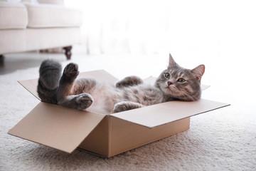 Fototapeta Cute grey tabby cat in cardboard box on floor at home obraz