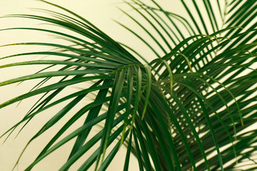 Tropical leaves on beige background, closeup. Stylish interior element