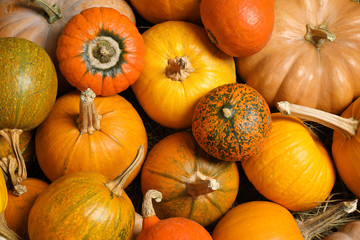 Many fresh ripe pumpkins as background, top view. Holiday decoration