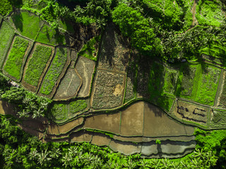 Terrace rice fields in morning sunrise, Ubud, Bali, Indonesia Aerial view