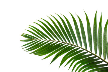 Fotobehang - leaves of coconut isolated on white background
