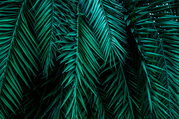 Foto op Canvas Palm boom tropical green palm leaf and shadow, abstract natural background, dark tone