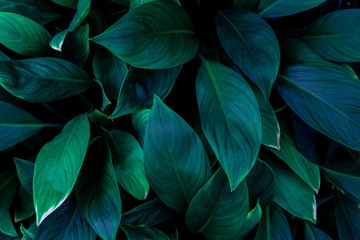 abstract green leaves pattern texture, nature background, tropical leaves