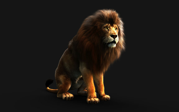 Dangerous Lion Isolated on Black Background, with Clipping Path, 3d Illustration.