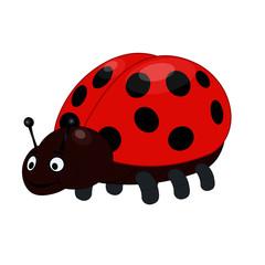 Two Ladybugs - Cartoon Vector Image