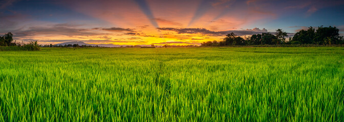 Landscape of young green rice field and beautiful sky sunset Fototapete