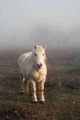 Papiers peints Gris traffic portrait d'un poney en hiver dans un champ