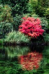 Printed kitchen splashbacks Khaki Autumn landscape - beautiful trees on the lake