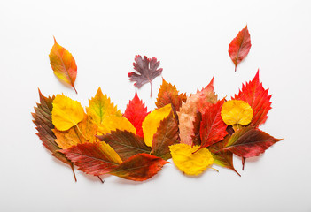 Wall Mural - Beautiful autumn leaves on white background