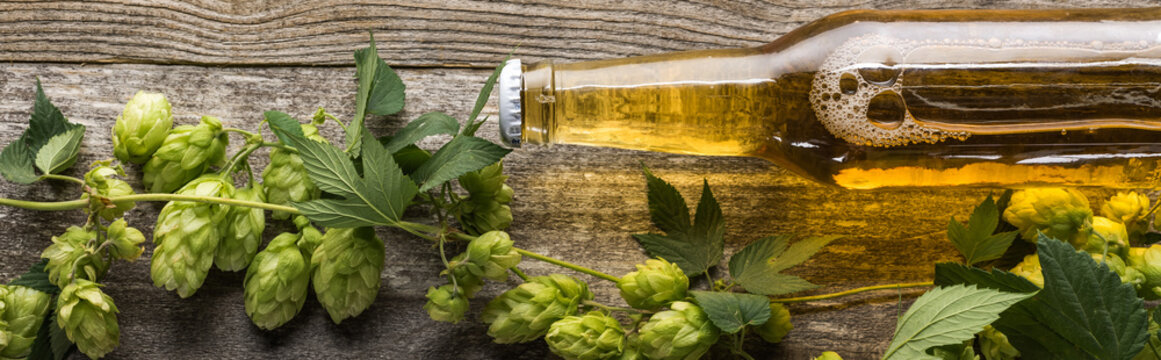 top view of fresh beer in bottle with green hop on wooden table, panoramic shot