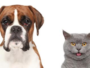 Cat and dog, close-up portrait