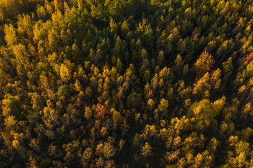 Top down view of a forest in autumn colors