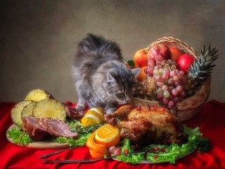 Thanksgiving table and little hungry kitten