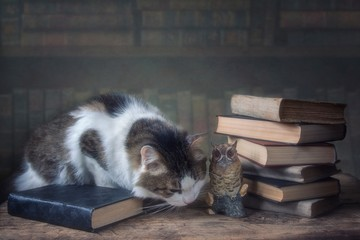 Cat sitting on a table among books