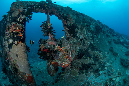 Shipwreck at Pacific harbour became artificial reef