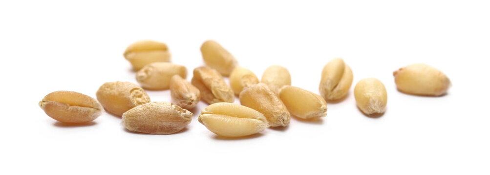 Wheat kernels isolated on white background, macro