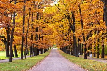 Oak alley in Catherine park in autumn, Tsarskoe Selo (Pushkin), St. Petersburg, Russia