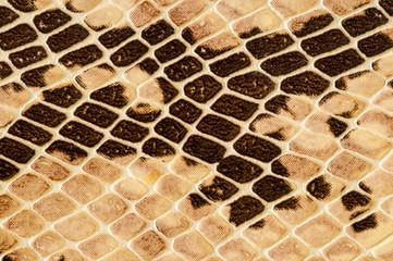 Snake skin pattern background , digital image picture