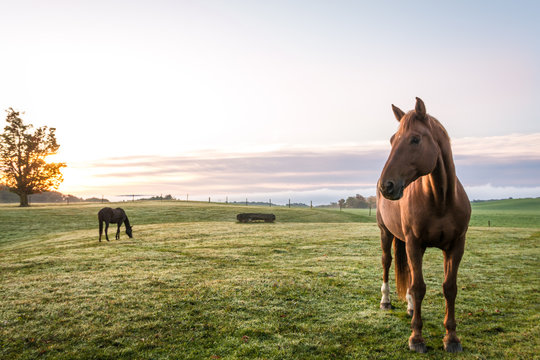 Horses grazing in pasture on a cold morning at sunrise beautiful peaceful landscape upstate NY