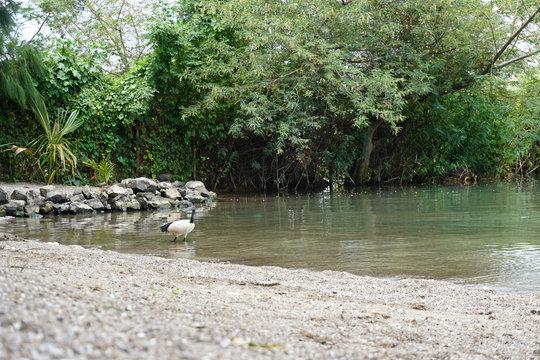 Bird standing in shallow water