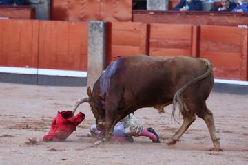 Torero y toro en la fiesta nacional