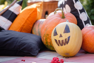 Many large ripened pumpkins with carved snouts and no are lying on the lawn near the heights and pillows on a sunny warm autumn day. Halloween fit concept