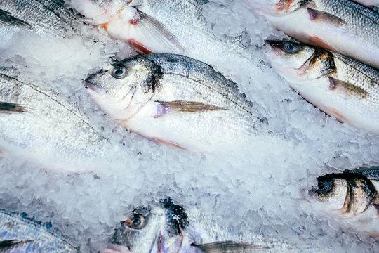 Dorado fish on ice fresh frozen fish sale