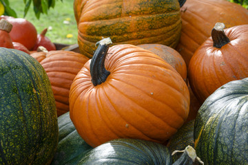 various pumpkins, decorative autumn vegetables for halloween and thanksgiving
