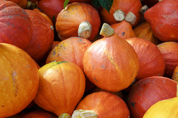 pumpkins of the variety red kuri squash for sale at a farmers market, autumn vegetable for halloween and thanksgiving