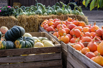 various pumpkins in large wooden boxes for sale at a farmers market, autumn food and decoration for halloween and thanksgiving