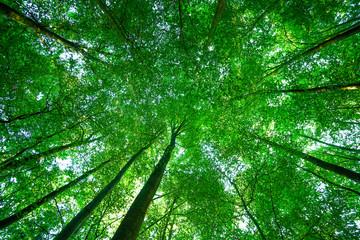 Baumkronen im Wald