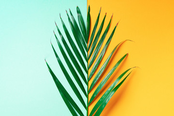 Palm leaf on trendy yellow and green background. Top view. Copy space. Fashion minimalism. Summer concept