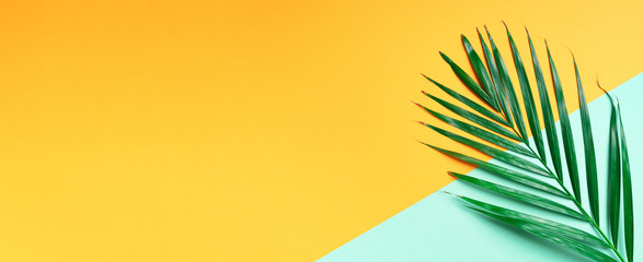 Palm leaf on trendy yellow and green background. Top view. Copy space. Fashion minimalism. Summer concept Wall mural