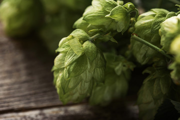 close up view of green hop on wooden surface