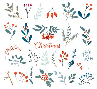Christmas floral collection with winter decorative plants and flowers. Cute hand drawn in scandinavian style. Illustration of winter berries and Christmas branches.