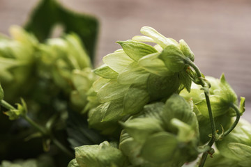close up view of green fresh hop